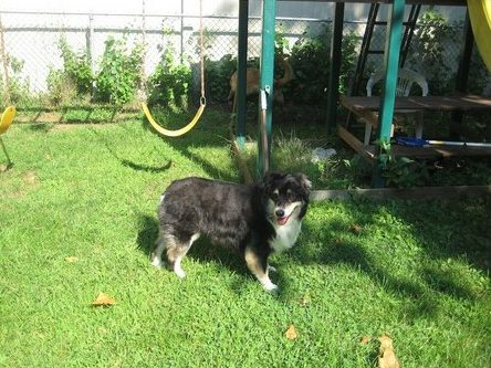 Dog standing in front of a playground swing