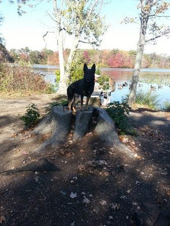 Dog standing on top of a tree stump