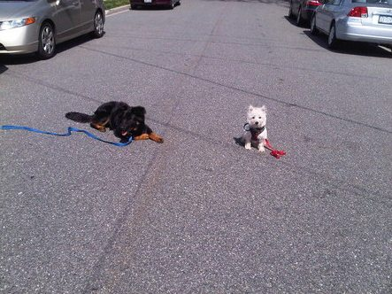 Two dogs sitting patiently in the road