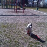 Dog sitting patiently in a park while wearing a leash